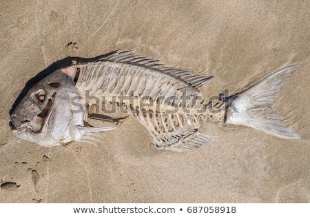 Hal csont csontok holttest bőr halott Stock fotó © dannyburn