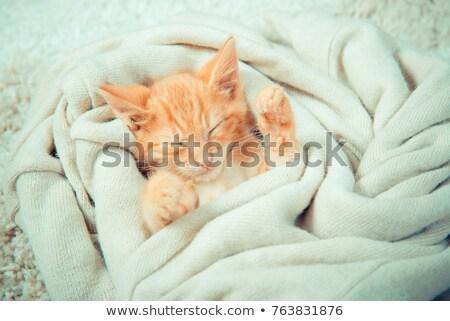 Kedi yavrusu ultrason oda kadın ofis Stok fotoğraf © wavebreak_media