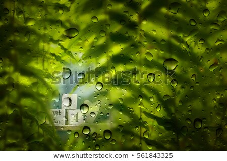 waterdrop on leaf 14 Stock photo © LianeM