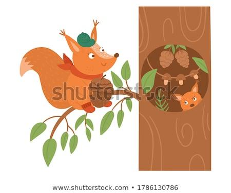 piros · mókus · állat · karakter · rajz · illusztráció - stock fotó © marysan