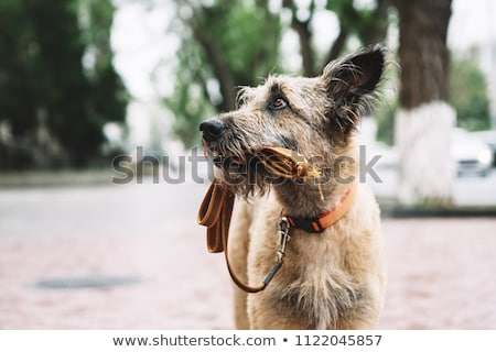 Perdu chien illustration signe contact photo Photo stock © colematt