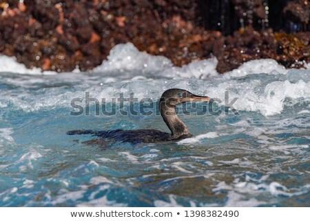 Faune oiseau yeux bleus océan panoramique bannière Photo stock © Maridav