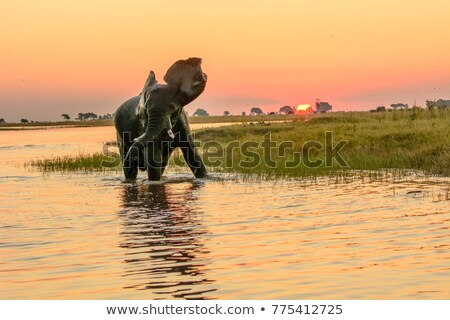 African sunset on Chobe river, Botswana Stock photo © artush