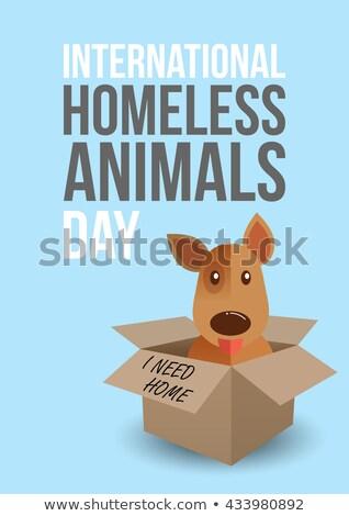 Nemzetközi hajléktalan állatok nap 19 augusztus Stock fotó © barsrsind