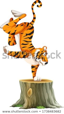 тигр Постоянный один стороны иллюстрация рук Сток-фото © bluering
