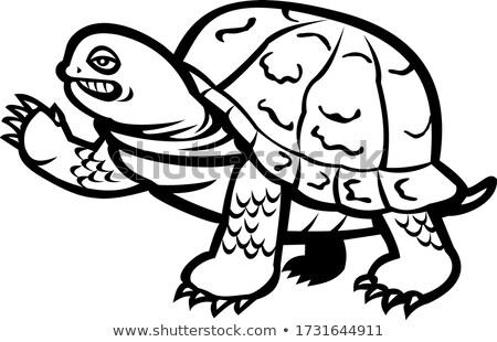 Orientale finestra tartaruga bianco nero mascotte Foto d'archivio © patrimonio