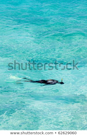 snorkeling, Southern coast of Barbados, Caribbean Stock photo © phbcz