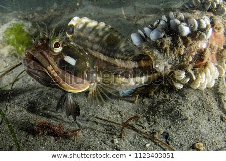 魚 · 隠蔽 · 水 · 海 · 美 · 海 - ストックフォト © Laracca