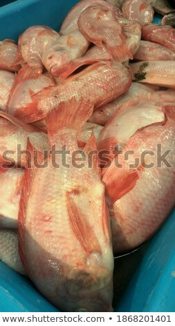 Fish Called Tilapia Stock photo © ildi