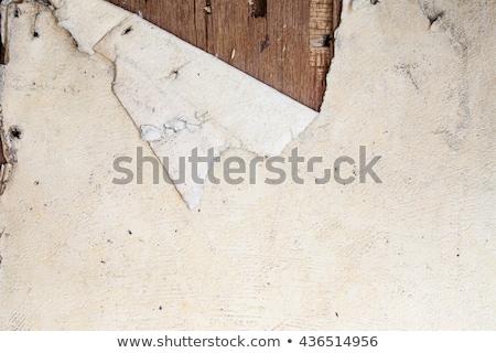 torn flowers peeling wall Stock photo © sirylok