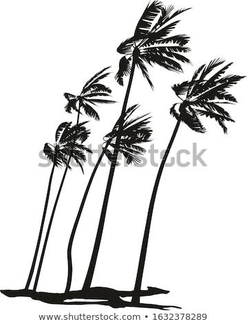 groep · palmbomen · witte · geïsoleerd · voorjaar · natuur - stockfoto © wjarek