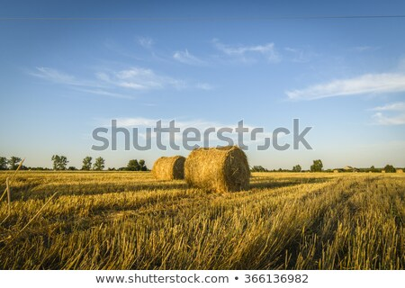 Alan saman tahıl kırsal Stok fotoğraf © timwege