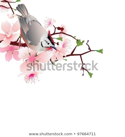 sprung  bird on blossom cherry tree branch, japan style sakura Stock photo © cherju