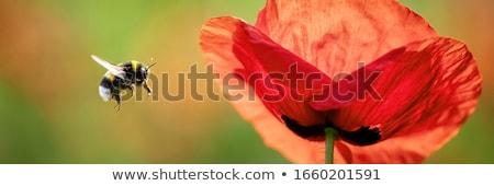vermelho · erva · daninha · flor · blue · sky · jardim · verão - foto stock © samsem