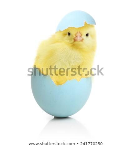 Pequeno bebê colorido ovos de páscoa ao ar livre Foto stock © AndreyKr