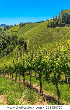 Toskana · bağ · ünlü · şarap · bölge · İtalya - stok fotoğraf © bertl123