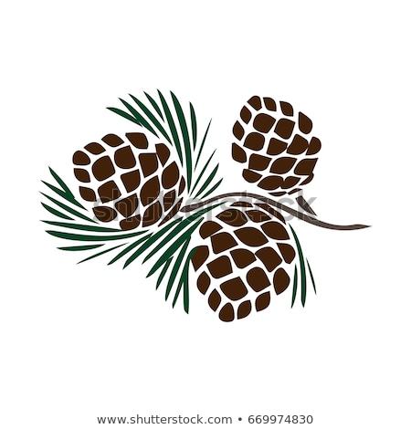 pine cones on a tree branch stock photo © len44ik