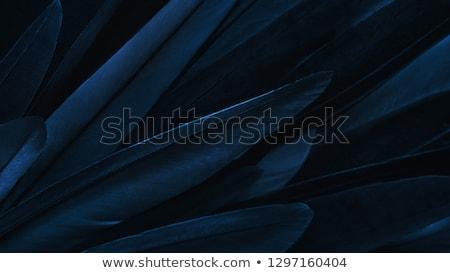 Feather on dark blue background Stock photo © sqback