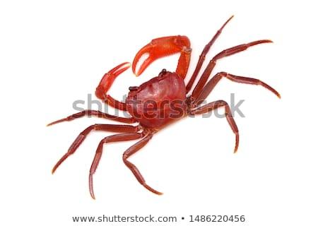 Rouge terres crabe Thaïlande forêt été Photo stock © pzaxe