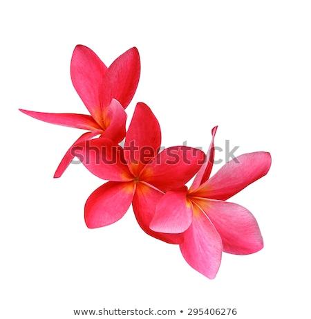 Piros virág kert nyár fürdő növény Stock fotó © tungphoto