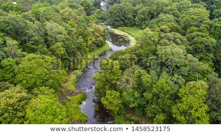Creek flowing through a forest, Costa Rica Stock photo © bmonteny