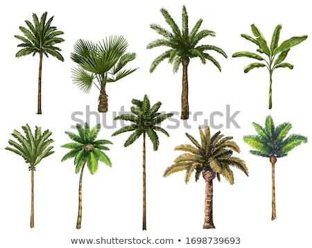 ヤシの木 詳細 ツリー 背景 熱帯 パターン ストックフォト © olandsfokus