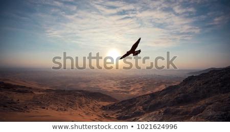 Falcoaria pôr do sol ilustração menina homem floresta Foto stock © adrenalina