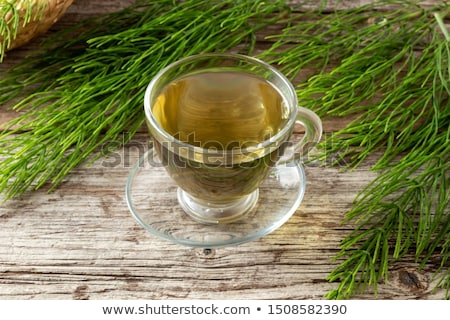 equisetum stock photo © prill