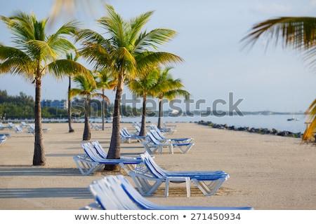 beautiful empty beach in the keys stock photo © meinzahn