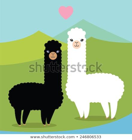 Peruvian couple and lamas Stock photo © adrenalina
