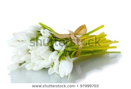 Bahar çiçekler yeşil şerit mavi çiçek Stok fotoğraf © LoopAll