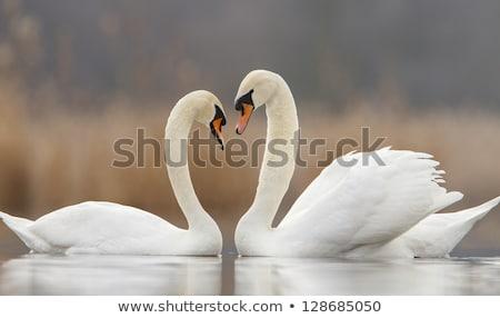 Paar dempen vijver rand natuur schoonheid Stockfoto © brianguest