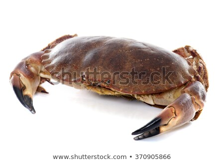 Brown crab on white background Stock photo © bluering