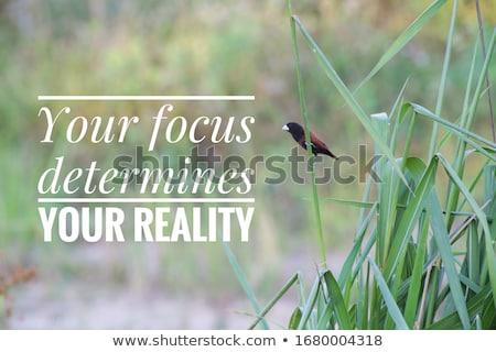 Focus determinazione profondità Foto d'archivio © Lightsource