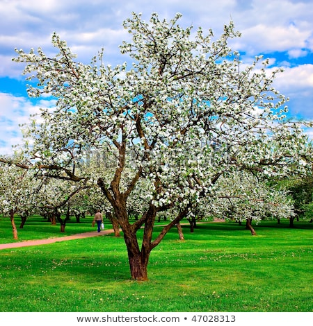 Vivid soft spring apple blossom Stock photo © Zela