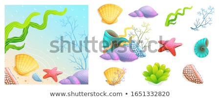 Set of scallops scene Stock photo © bluering