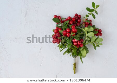 cranberry bouquet paths stock photo © maxsol7