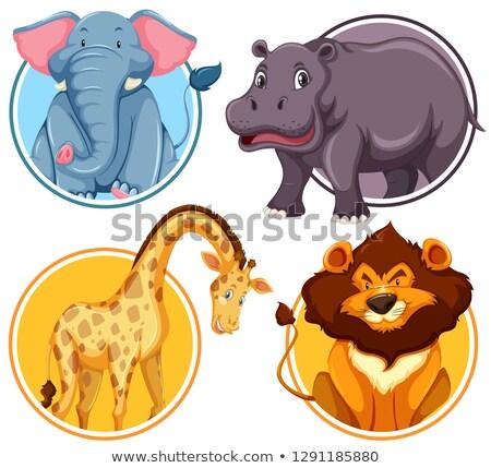 Set african fauna selvatica cerchio banner illustrazione Foto d'archivio © bluering