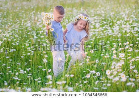 Cute child girl at camomile field daisy with baby brother Stock photo © Lopolo