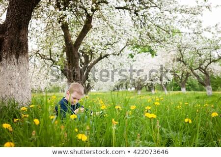Erkek okuma kitap elma ağacı örnek çocuk Stok fotoğraf © colematt