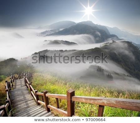 Bergen mist mooie nacht zomer landschap Stockfoto © denbelitsky