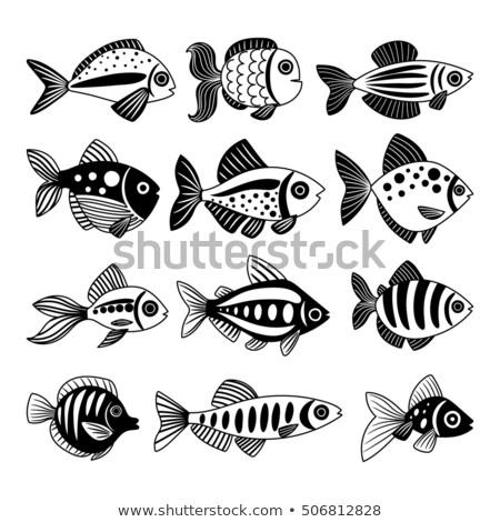 aquarium with decorative fish monochrome vector stock photo © pikepicture