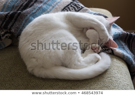 White cute cat sleeping on a sofa curled up Stock photo © galitskaya