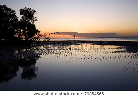 Tidal Flats in South Florida stock photo © mtilghma