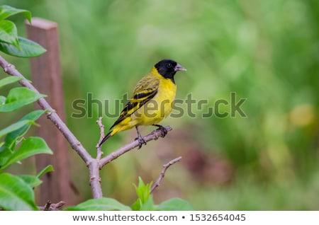 brillante · colibrì · ramo · Ecuador · uccello - foto d'archivio © rhamm