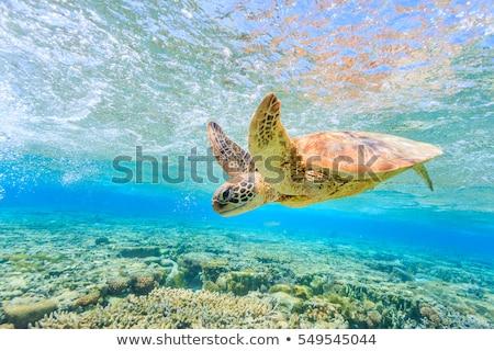 Szigetek zöld tenger terméketlen LA természet Stock fotó © jkraft5