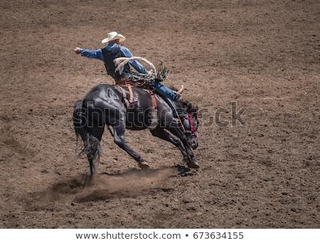Rodeio vaqueiro ilustração pôr do sol cavalo fazenda Foto stock © adrenalina
