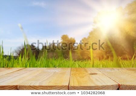 Picknicktafel verweerde hout geïsoleerd Stockfoto © Lightsource