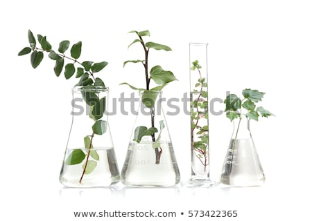 chemical glass tube with a plant  Stock photo © OleksandrO