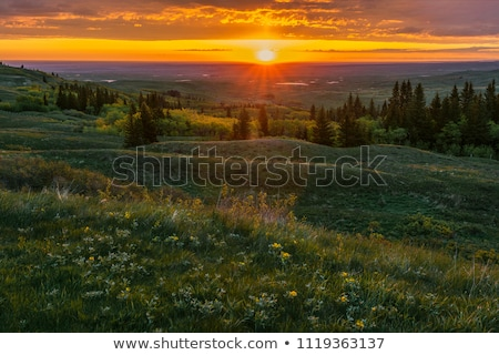 Cypress Hills Alberta Saskatchewan Stock photo © pictureguy